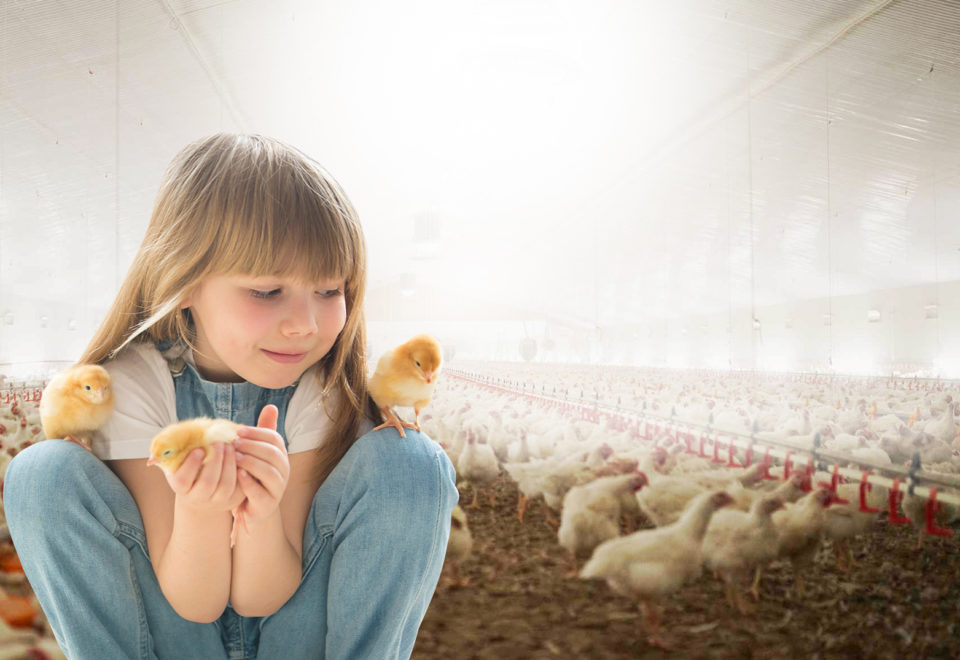 Kid with chicks and chickens